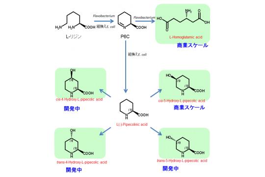 L-ピペコリン酸類縁体 | 日本マ...